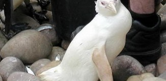 albino_animals_1.jpg