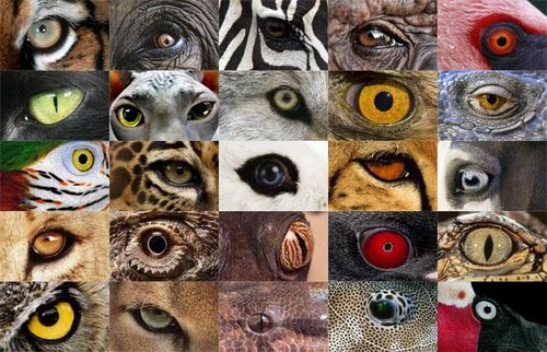 animal eyes