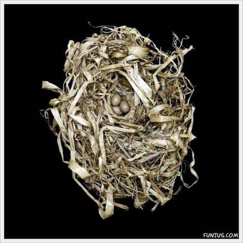 bird nest 10