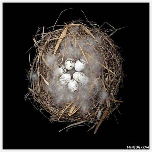 bird nest 12
