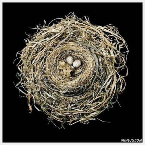 bird nest 16