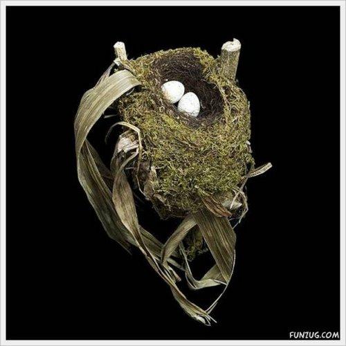 bird nest 17