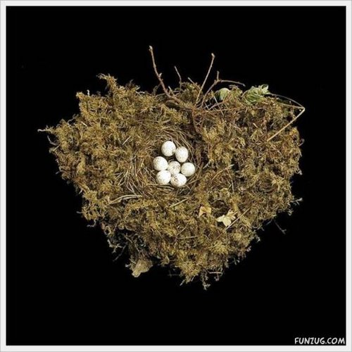 bird nest 18
