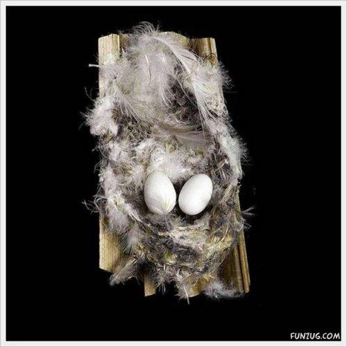 bird nest 20