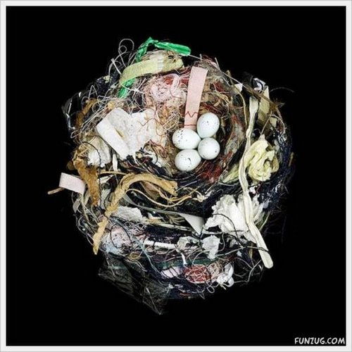 bird nest 6
