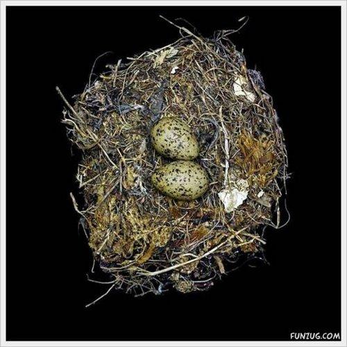 bird nest 7