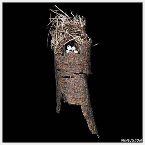 bird nest 8
