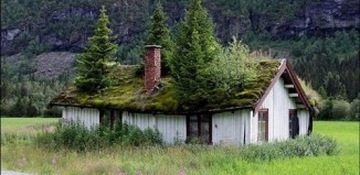grass_roof_norway_1.jpg