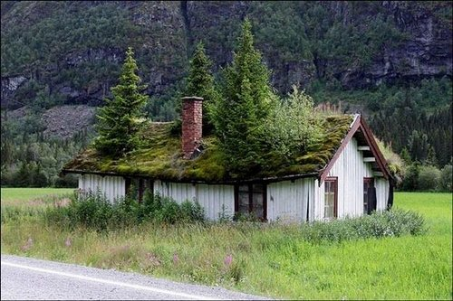 grass roof norway 1