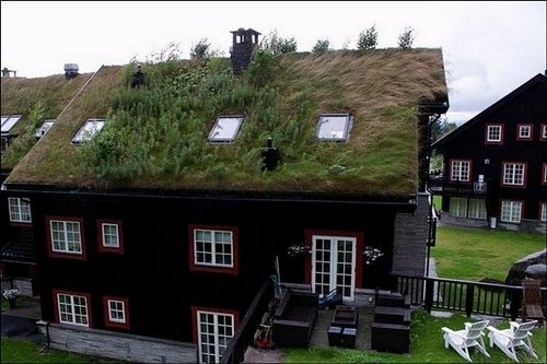 grass roof norway 11