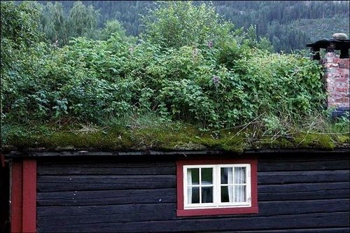 grass roof norway 2