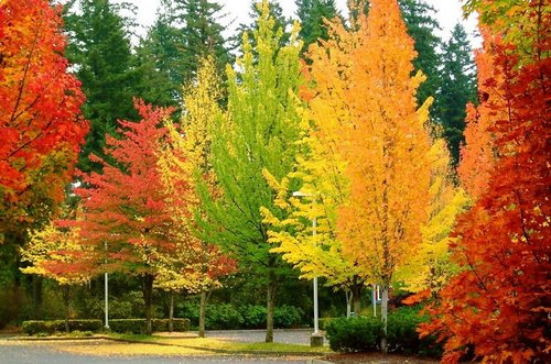 rainbow fall 3
