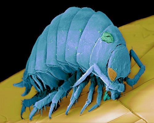 micro monsters 9