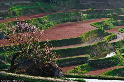 rice terraces in china 11