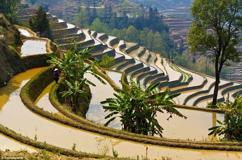 rice terraces in china 13