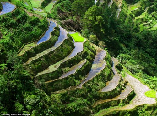 rice terraces in china 15
