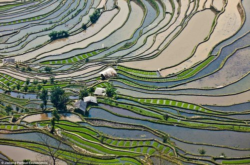rice terraces in china 2