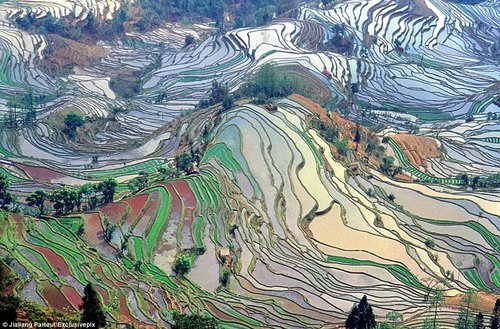 rice terraces in china 3