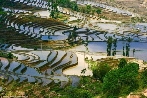 rice terraces in china 4