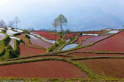 rice terraces in china 5
