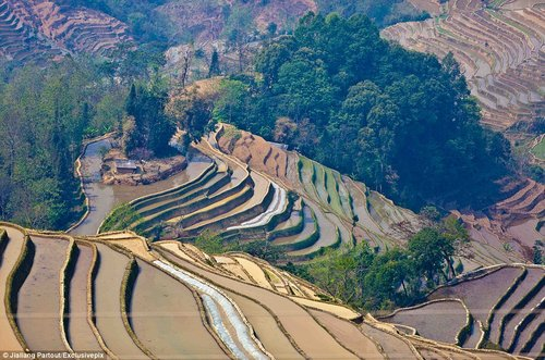 rice terraces in china 8