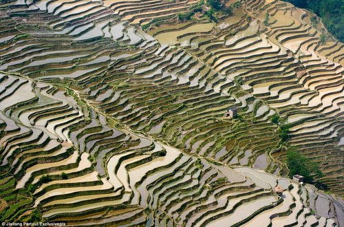 rice terraces in china 9