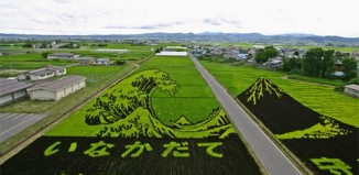 rice_field_art_1.jpg