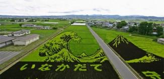 rice_field_art_1.jpg